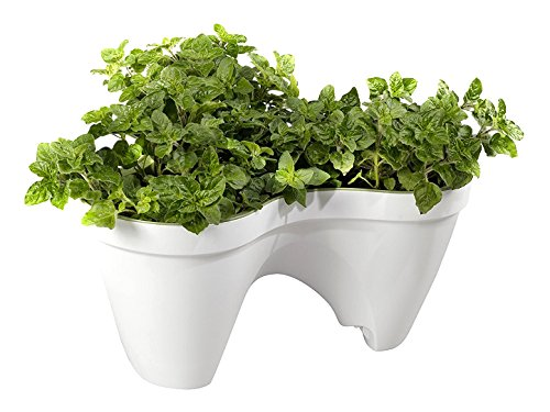 Keter -  Macetero triple aplilable Ivy, Color Blanco