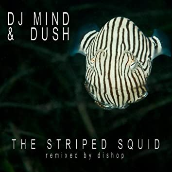 The Striped Squid