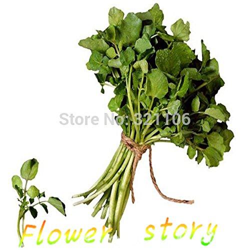 1 paquet de 400 graines de persil graines de céleri cresson de céleri cour intérieure balcon type de graines de légumes en pot