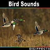 Close Duck Calls