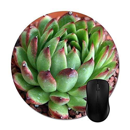 ASDAH Elegante Sukkulente Blumen-Mauspad Zubehör für Desktop-Computer rund – A1