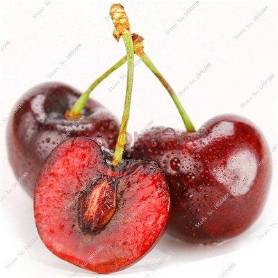 Multi Color Cerise Fruit Graines De Fleurs vivaces Jardin Plantes en pot Heirloom fruit délicieux croissance naturelle 10 particules 4