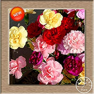 Cord Metal - 16 Colors Carnation Bonsai Balcony Potted Courtyard Garden Plants Dianthus Caryophyllus Flower Flores, 200 Pcs,#FA(Seed) - by Abuldahi