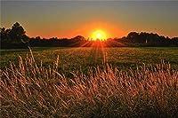 新しい風光明媚な日の出風景の背景7x5ft秋のフィールド農業空自然写真の背景秋のイベント結婚式屋外の風景旅行田舎写真撮影小道具ビデオ壁紙