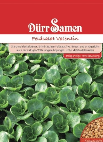 Dürr Samen 1263 Feldsalat Valentin Vorteilspackung (Feldsalatsamen)