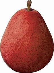 Pear D Anjou Red Organic, 1 Each