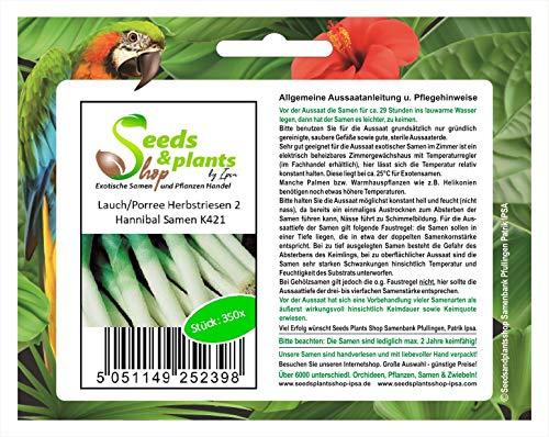 Stk - 350x LauchPorree Herbstriesen 2 Hannibal - Samen Gemüse Lauch Garten K421 - Seeds Plants Shop Samenbank Pfullingen Patrik Ipsa