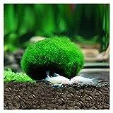 LINMAN Green Seaweed Ball Simulación Artificial Plantas Aquarium Decoración Agua Weeds Ornament Planta Fish Tank Aquarium Hierba (Color : Green, tamaño : 2cm)