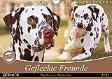 Gefleckte Freunde - Hunderasse Dalmatiner (Wandkalender 2021 DIN A4 quer)