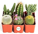 cactus one of the best plants for plant killers