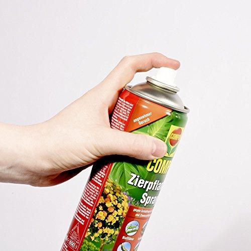 COMPO Zierpflanzen-Spray, Bekämpfung von Schädlingen an Zierpflanzen - 5