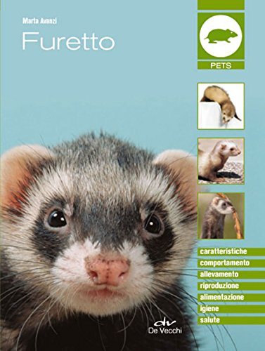 Furetto (Pets e animali da compagnia)