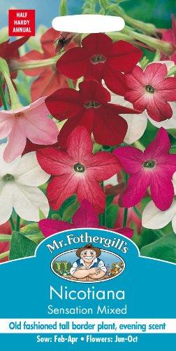 Mr Fothergills???Flux des paquets???Fleur???nicotiana Sensation mixte???2000?Graines