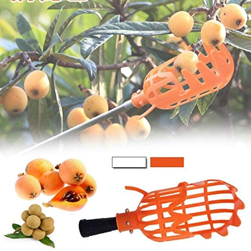 Abracing Fruit picker Orchard picking tool Plastic fruit picker 1 pcs. Only includes head, garden shed, device for picking fruit, farm garden (Envío desde : Francia, Tamaño : White)