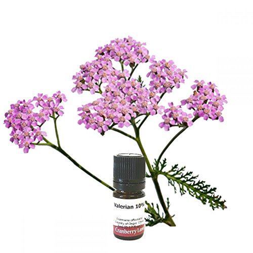 Best Review Of Valerian 10% in Jojoba oil 250ml