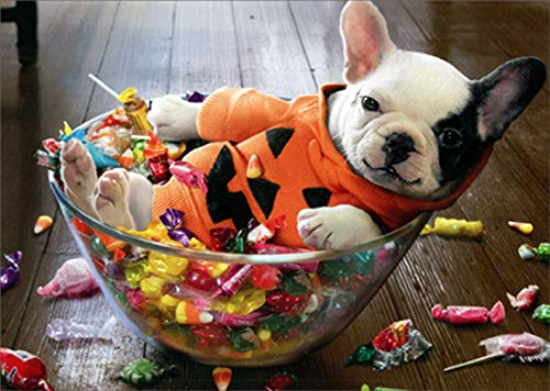 Avanti Puppy in Halloween Candy Bowl Funny/Humorous Halloween Card