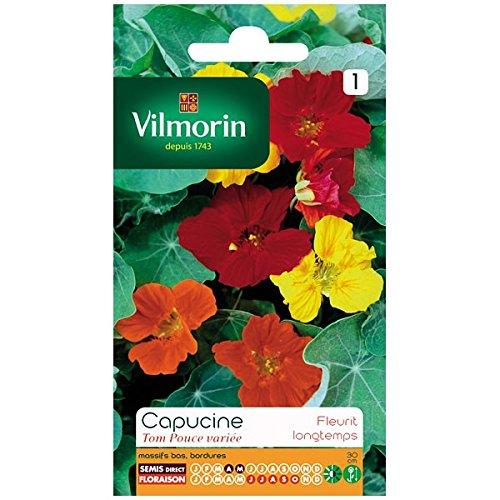 Vilmorin - Capucine Tom Pouce variée