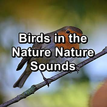 Birds in the Nature Nature Sounds