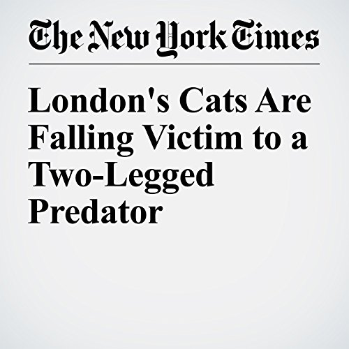 London's Cats Are Falling Victim to a Two-Legged Predator audiobook cover art