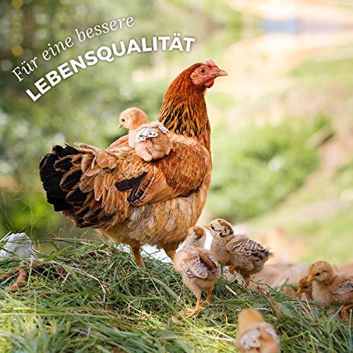 AniForte WermiX Pulver für Hühner, Gänse, Enten und Großvögel 20g - Naturprodukt vor, während und nach Wurmbefall mit Saponine, Bitterstoffe, Gerbstoffe, Wermut, Naturkräuter harmonisieren Magen & Darm - 5