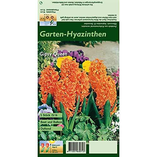 Florado 5x Hyazinthe Blumenzwiebeln `Gipsy Queen`, Zwiebelblumen, Balkon Garten, Blumen Schnittblumen, Bienen Hummeln, Größe 15/16