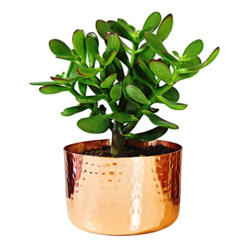 "Alchemade 4"" Hammered Copper Succulent Planter Plants"