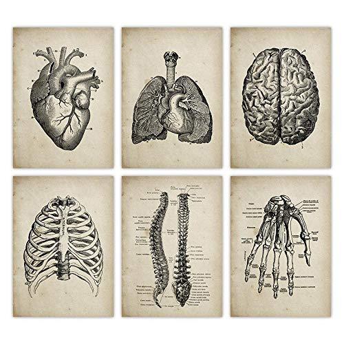 RLJHG AnatomíA Humana AnatomíA MéDica Ciencia Poster Antiguos Arte MéDico ClíNica Decoracion De Pared Cuadros Papel Kraft Decoracion De Pared 30x40cmx6 Sin Marco
