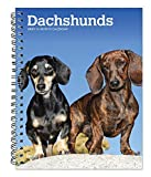 Dachshunds 2021 6 x 7.75 Inch Spiral-Bound Wire-O Weekly Engagement Planner Calendar | New Full-Color Image Every Week | Animals Dog Breeds Pets