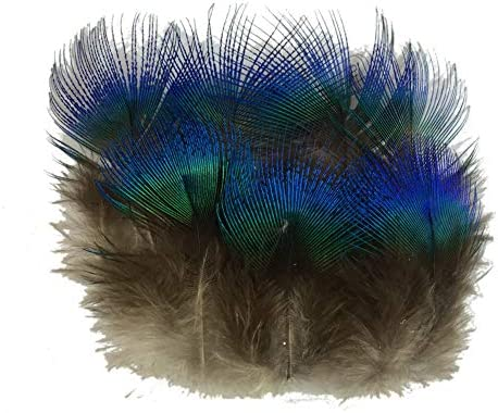 Sowder 10pcs Red Lady Amherst Pheasant Plumage Feathers 6-8 Inches for Home Wedding Decoration