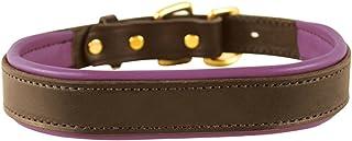 Perri's Padded Leather Dog Collars in Metallic and Bold Non-Metallic Colors Medium