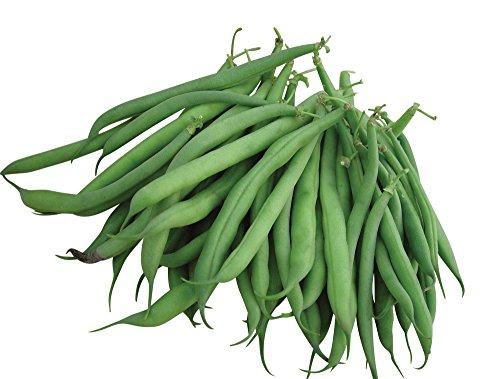 Burpee Stringless Green Pod Bush Bean Seeds 4 ounces of seed