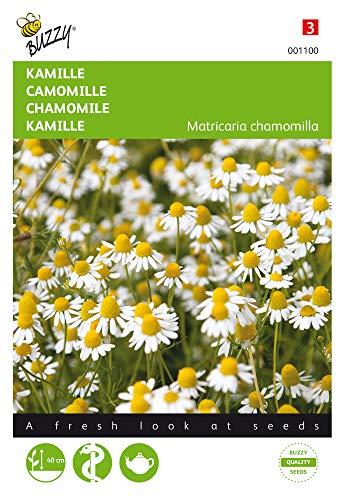 Buzzy Seeds 001100 Kamille (Kamillesamen)
