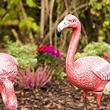 Relaxdays Dekofigur Flamingo, wetterfest, frostfest, Gusseisen, Innen und Außen, Gartendeko, HxBxT 56 x 35 x 18 cm, pink - 5