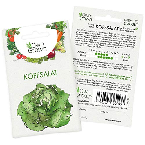 OwnGrown Premium Kopfsalat Samen (Lactuca sativa), Kopfsalatsamen zum Anbauen, Saatgut für rund 250 Kopfsalat Pflanzen Sorte Maikönig