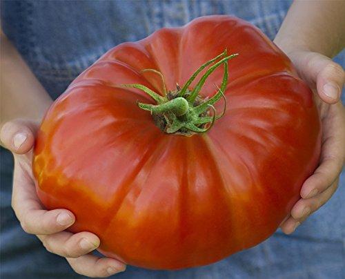 Justseed Legumes Tomate Gigantomo 10 graines