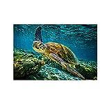 SDFDG Poster, Motiv: Schildkröte, Korallenriff, Wildtiere,