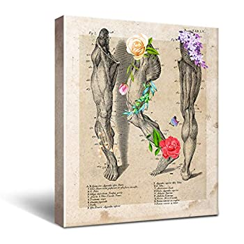Anatomy Leg Muscle Canvas Wall Art for Doctor Office Decor Medical School Graduation Gift Social Worker Graduation Gift Occupational Therapist Gift Size 8x10