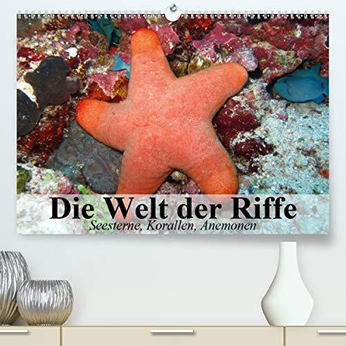 Die Welt der Riffe. Seesterne, Korallen, Anemonen (Premium, hochwertiger DIN A2 Wandkalender 2021, Kunstdruck in Hochglanz)