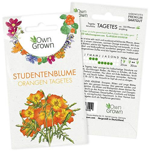 Orangen Tagetes Samen: Premium Studentenblumen Samen für ca. 150x blühende Tagetes Pflanzen – Blumensamen Balkon für Essbare Blüten – Studentenblume Blumen Saatgut – Wiesenblumen Samen von OwnGrown