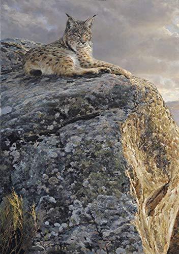 """Lince Ibérico Lámina sobre lienzo.""""Lince Iberico sesteando"""" Cuadro de Lince (Lynx pardina) 39 x 57 cms. Cuadros de animales, mamíferos"""