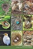 Oeufs d'oiseaux Carnet de notes Collectionneur passionné Ooligistie: Calepin ligné, répertoriez vos collections, journal ou autre usage   Cadeau Noel Anniversaire