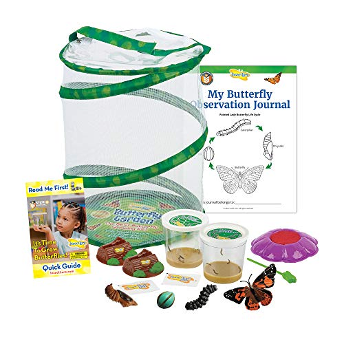 Insect Lore Butterfly Garden with Two Cups of Caterpillars - Plus Butterfly Life Cycle Stages