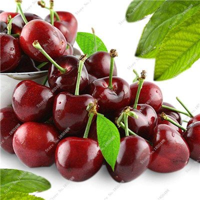 Multi Color Cerise Fruit Graines De Fleurs vivaces Jardin Plantes en pot Heirloom fruit délicieux croissance naturelle 10 particules 2