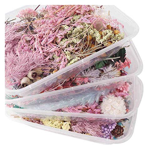 HETHYAN Dried Flowers-1 Box Real Mix Dried Flower Dry Plants For Aromatherapy Candle Epoxy Resin Pendant Necklace Making Craft DIY (Color : Random 1box)