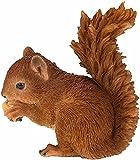 Real Life Baby Red Eichhörnchen | Harz-Dekoration für Haus oder Garten | XRL-RS01-F