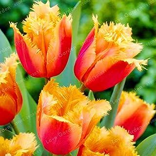 Pinkdose 2 bulbos Verdaderos bulbos de tulipán, flor de tulipán, planta de flor de tulipanes para plantas de jardín (no tulipán Bonsái) bulbos de flor simboliza el amor: amarillo