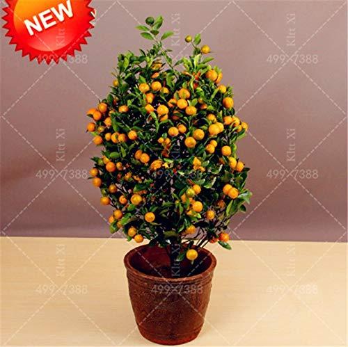 Honic 20 Pcs Bag Balcony Patio Potted Fruit Trees Planted Bonsai Kumquat Plants Orange Garden Tangerine Citrus Buy Online In El Salvador At Elsalvador Desertcart Com Productid 183204082