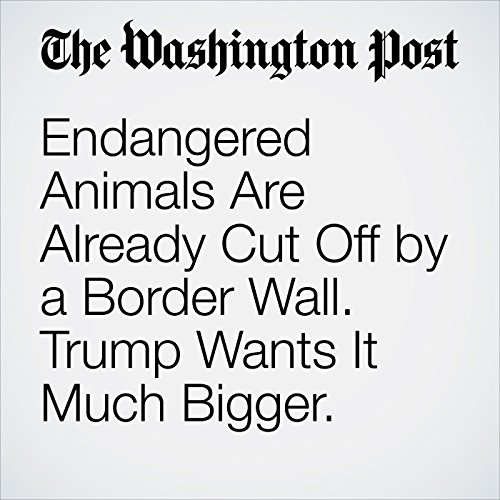 Endangered Animals Are Already Cut Off by a Border Wall. Trump Wants It Much Bigger. copertina