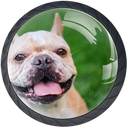 Lächelndes Gesicht Französische Bulldogge Hellbraun [4 Stuck] Küchenknöpfe - Türknopf Knauf für Schrank, Schubladenknopf, Türknäufe, Möbelknopf