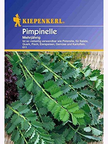 Pimpinelle mehrjährig